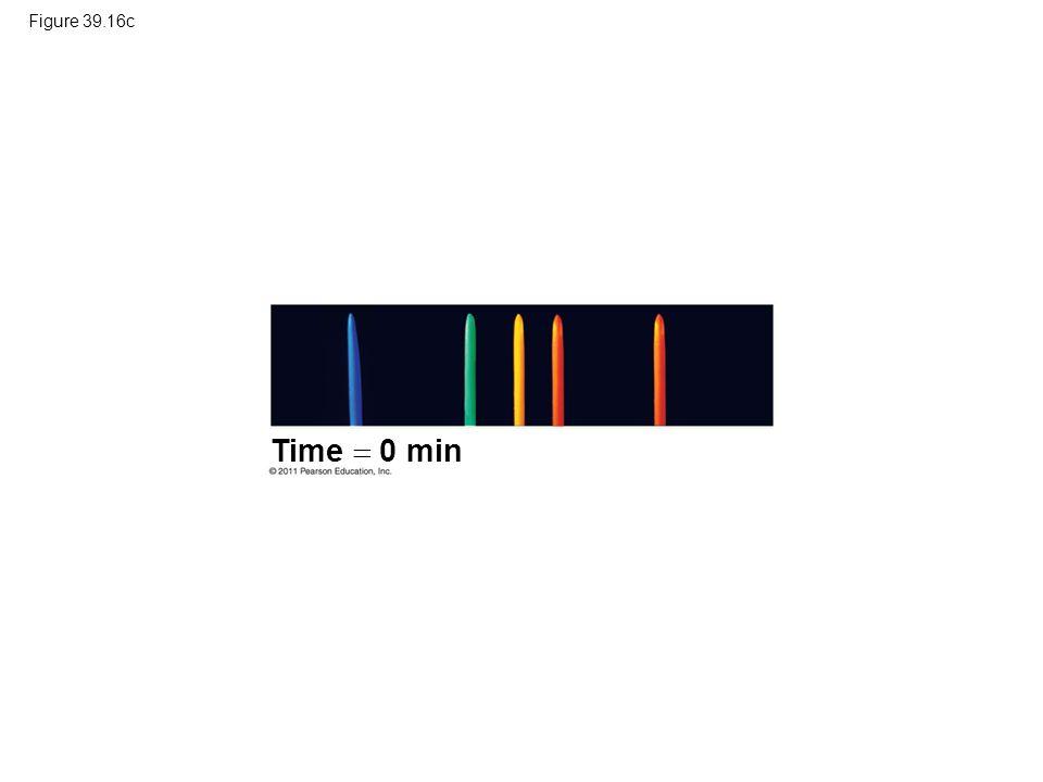 Figure 39.16c Time  0 min.