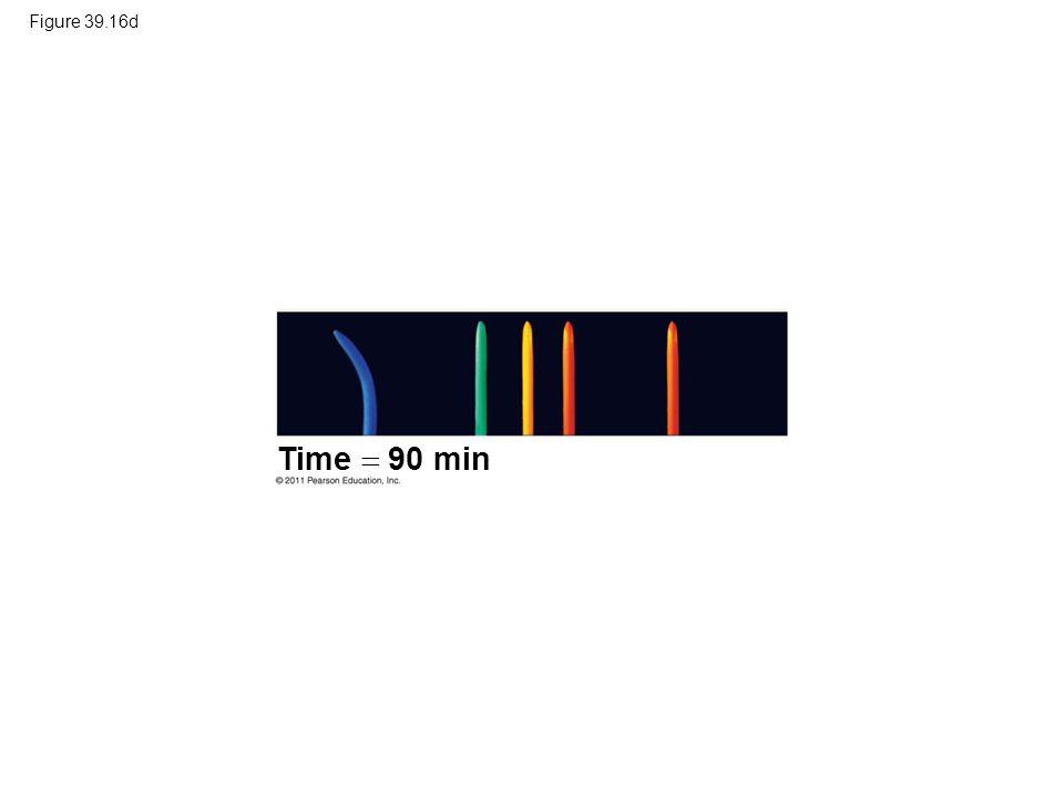 Figure 39.16d Time  90 min.