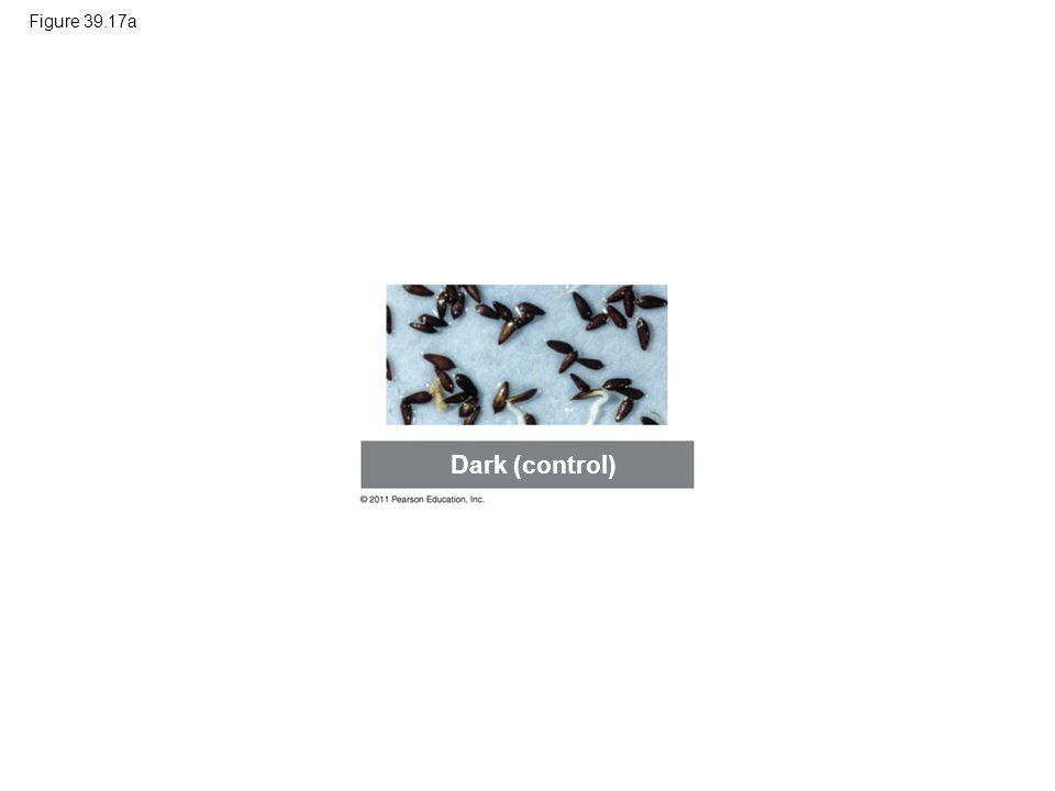 Dark (control) Figure 39.17a