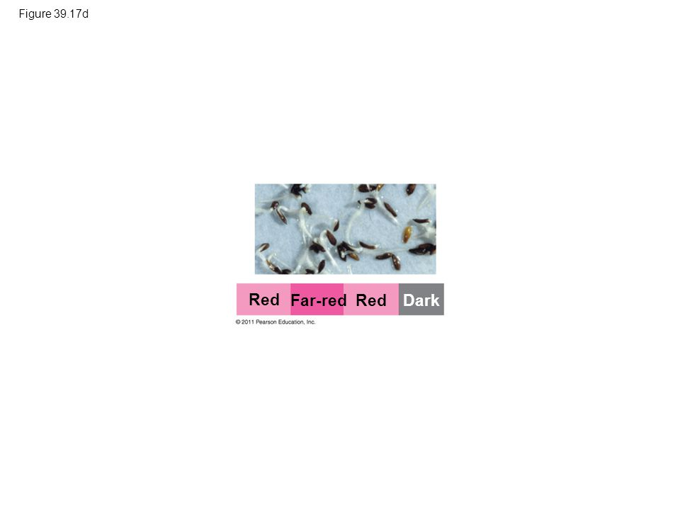 Red Far-red Red Dark Figure 39.17d