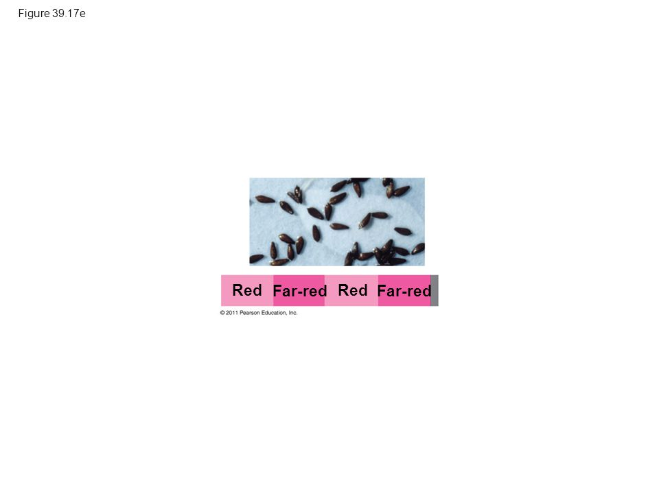 Red Far-red Red Far-red Figure 39.17e
