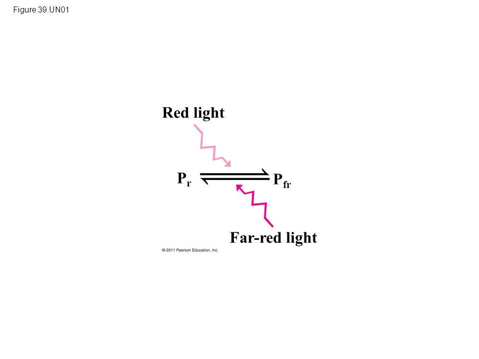 Red light Pr Pfr Far-red light Figure 39.UN01