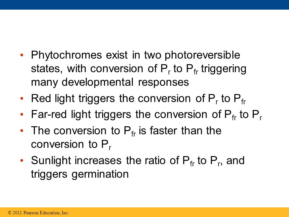Red light triggers the conversion of Pr to Pfr