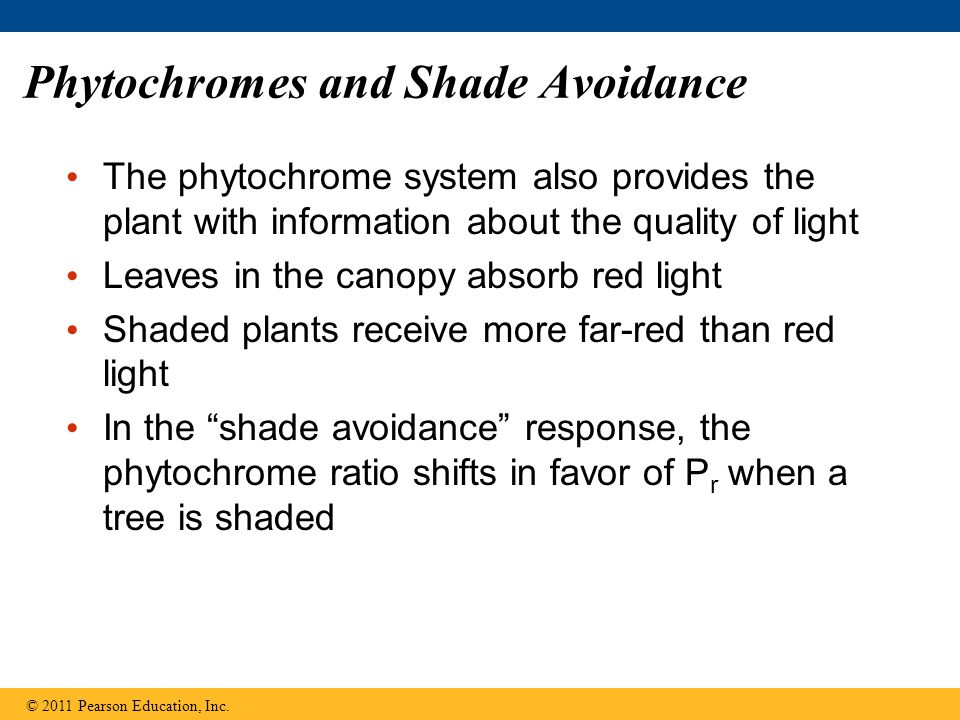 Phytochromes and Shade Avoidance