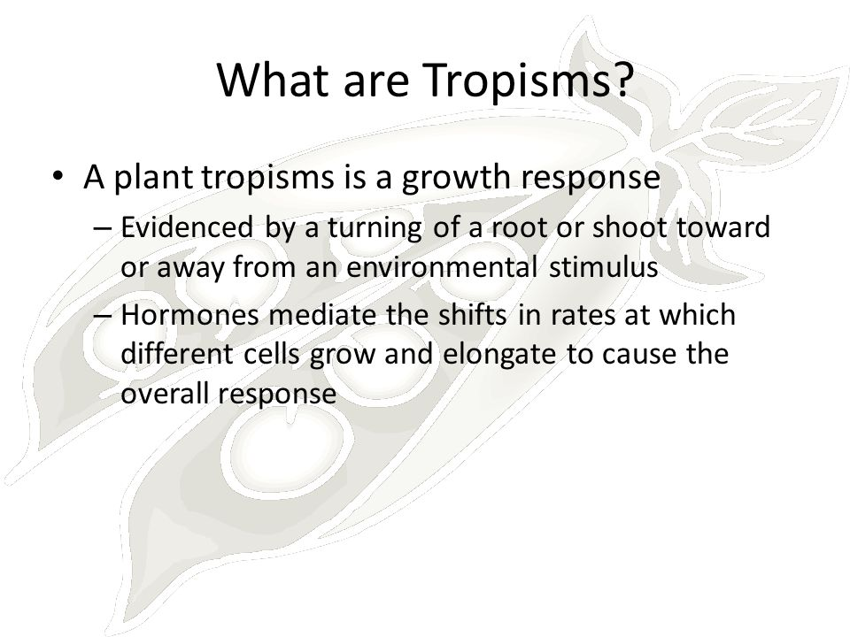 What are Tropisms A plant tropisms is a growth response