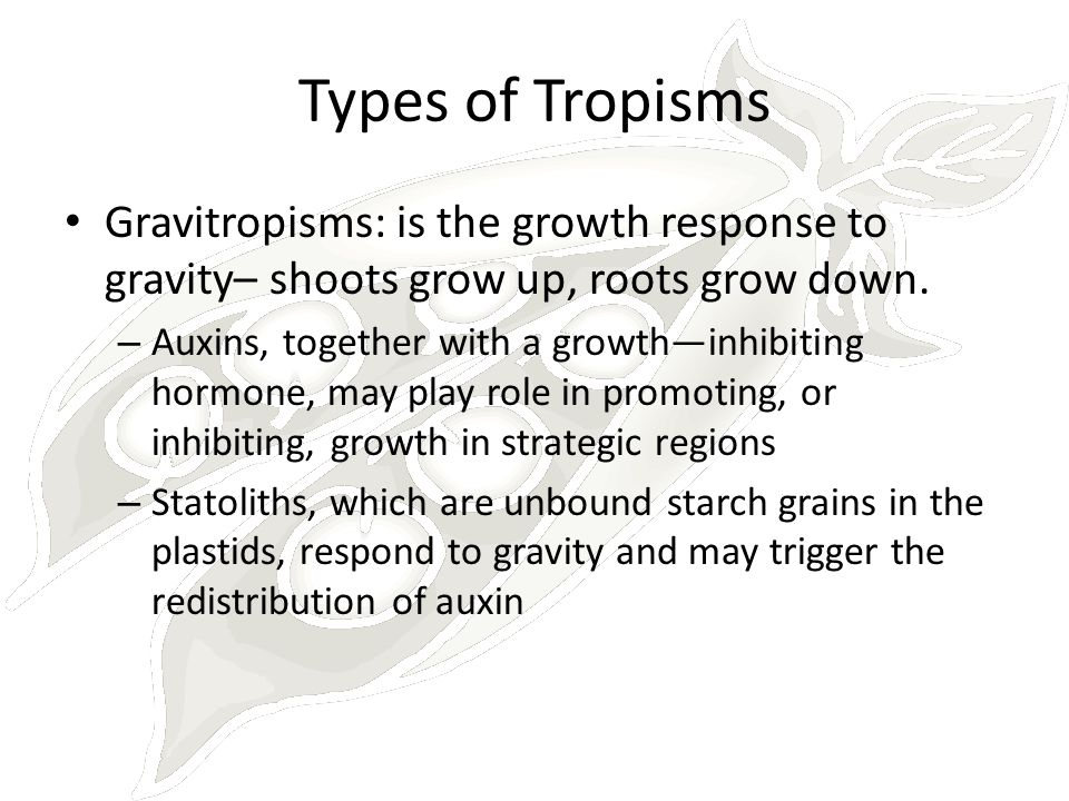 Types of Tropisms Gravitropisms: is the growth response to gravity– shoots grow up, roots grow down.