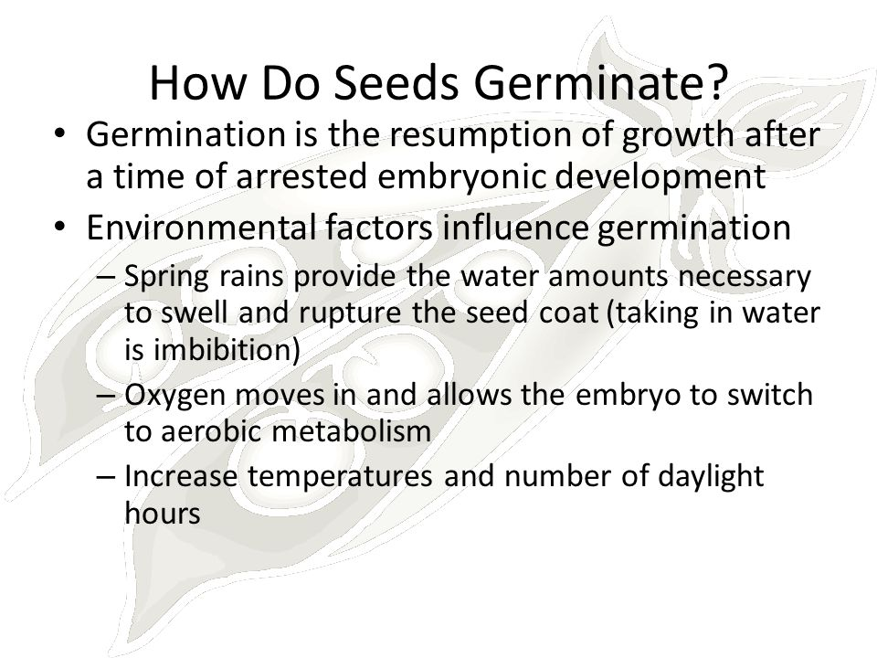 How Do Seeds Germinate Germination is the resumption of growth after a time of arrested embryonic development.