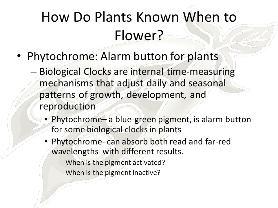 How Do Plants Known When to Flower