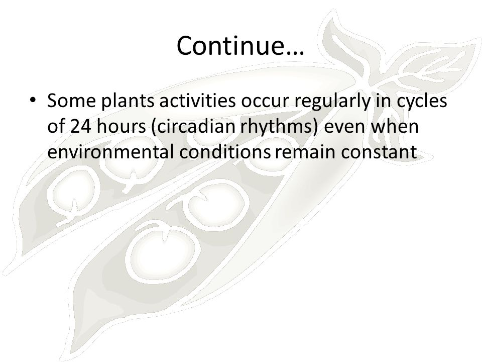 Continue… Some plants activities occur regularly in cycles of 24 hours (circadian rhythms) even when environmental conditions remain constant.
