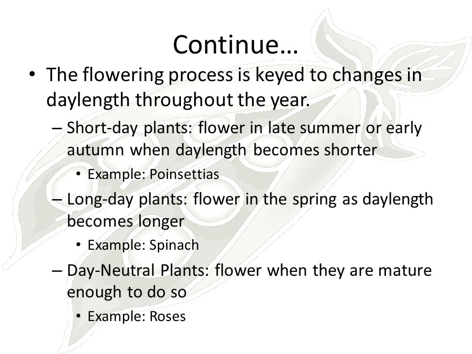 Continue… The flowering process is keyed to changes in daylength throughout the year.