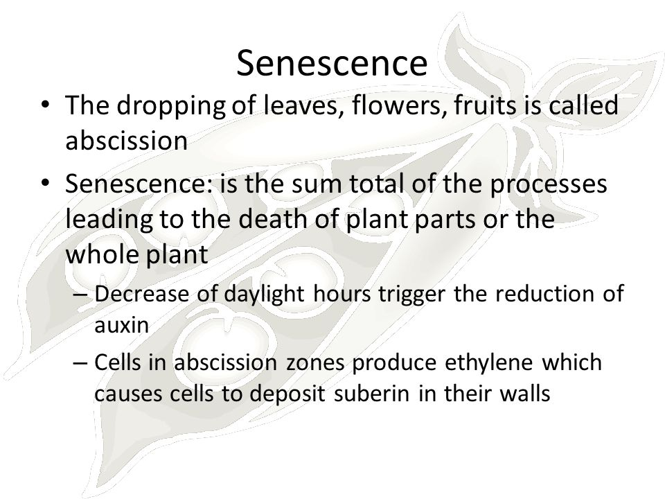 Senescence The dropping of leaves, flowers, fruits is called abscission.