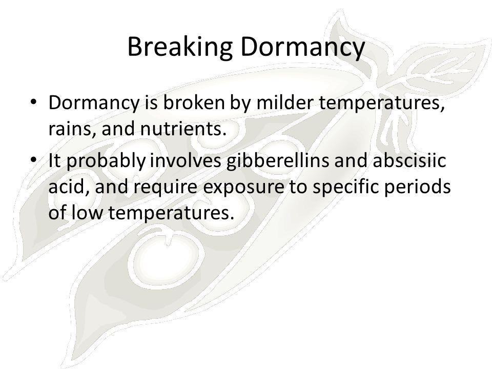 Breaking Dormancy Dormancy is broken by milder temperatures, rains, and nutrients.