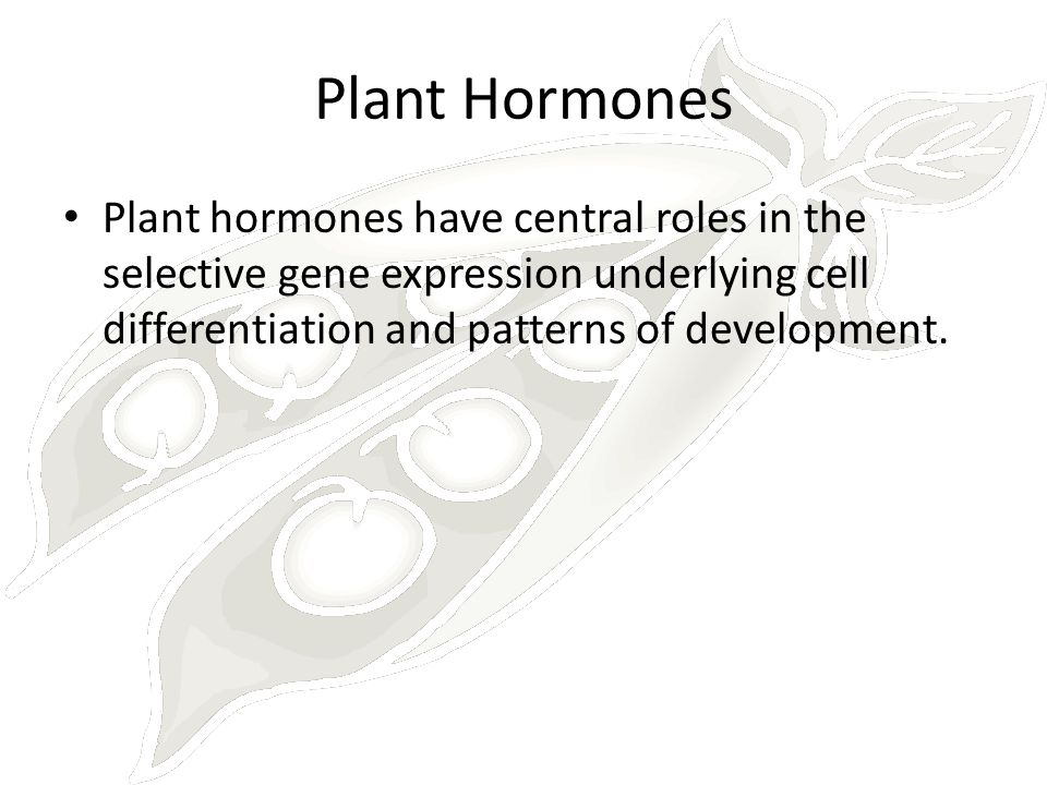 Plant Hormones Plant hormones have central roles in the selective gene expression underlying cell differentiation and patterns of development.