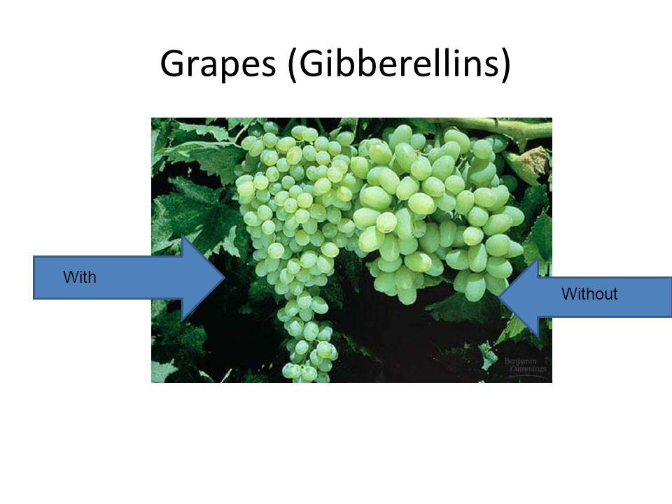 Grapes (Gibberellins)