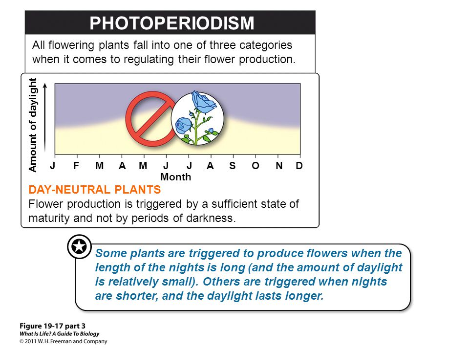 PHOTOPERIODISM All flowering plants fall into one of three categories when it comes to regulating their flower production.