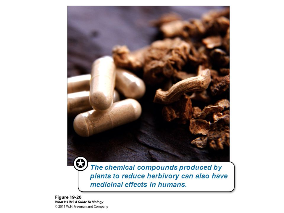  The chemical compounds produced by plants to reduce herbivory can also have medicinal effects in humans.