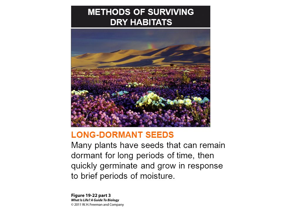 METHODS OF SURVIVING DRY HABITATS. LONG-DORMANT SEEDS.