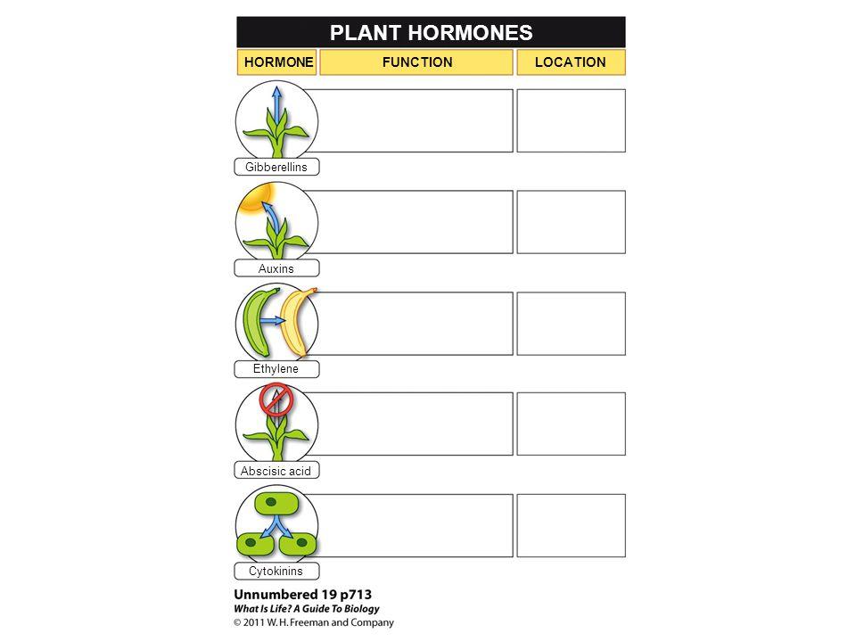 PLANT HORMONES HORMONE FUNCTION LOCATION Gibberellins Auxins Ethylene