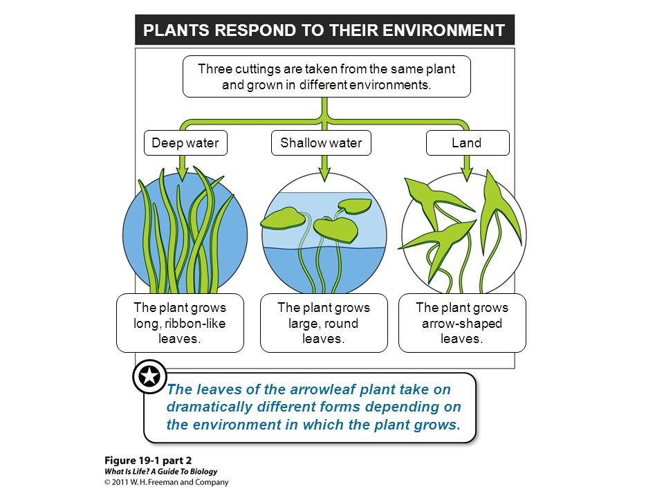 PLANTS RESPOND TO THEIR ENVIRONMENT
