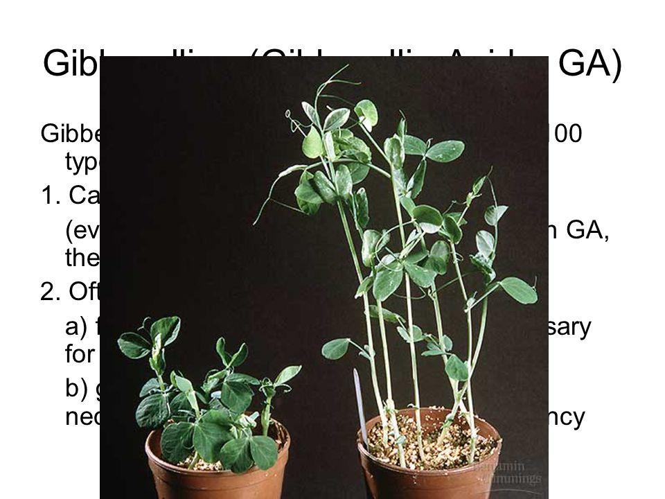 Gibberellins (Gibberellic Acid – GA)