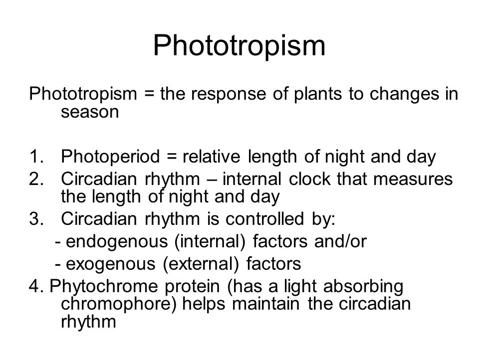Phototropism Phototropism = the response of plants to changes in season. Photoperiod = relative length of night and day.