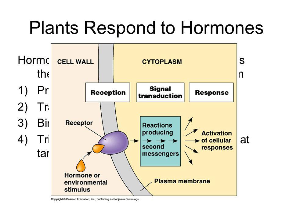Plants Respond to Hormones