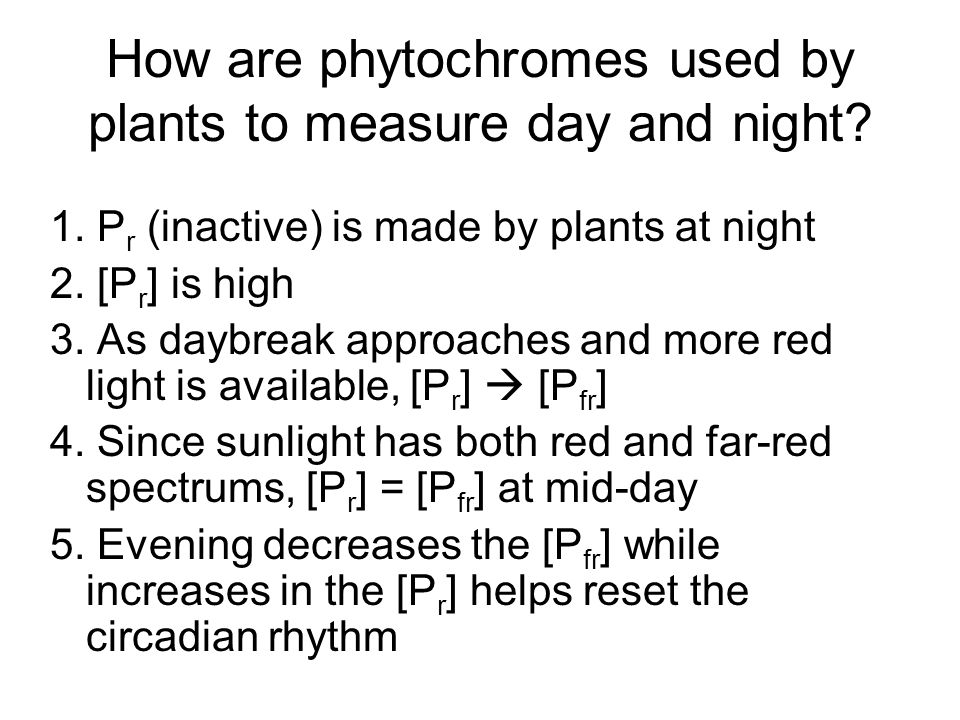 How are phytochromes used by plants to measure day and night