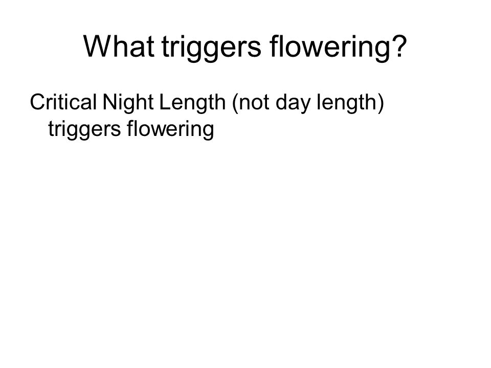 What triggers flowering