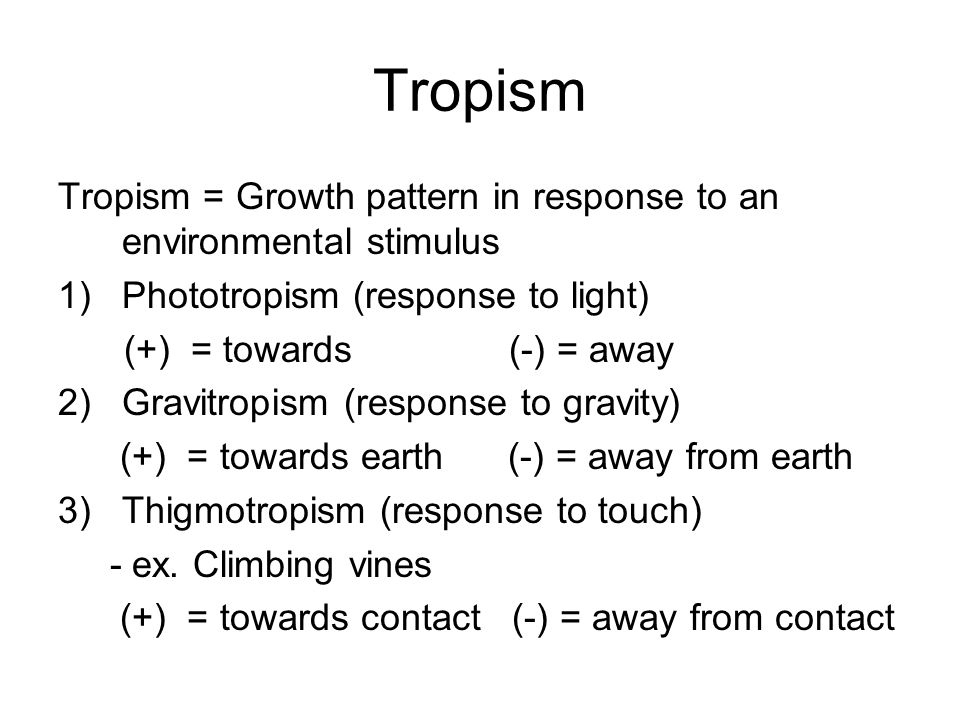 Tropism Tropism = Growth pattern in response to an environmental stimulus. Phototropism (response to light)