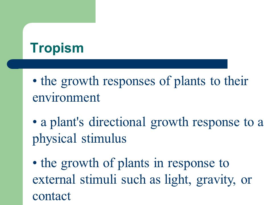 Tropism the growth responses of plants to their environment. a plant s directional growth response to a physical stimulus.