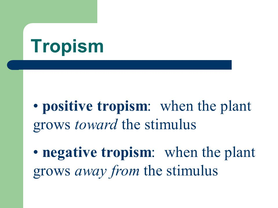 Tropism positive tropism: when the plant grows toward the stimulus