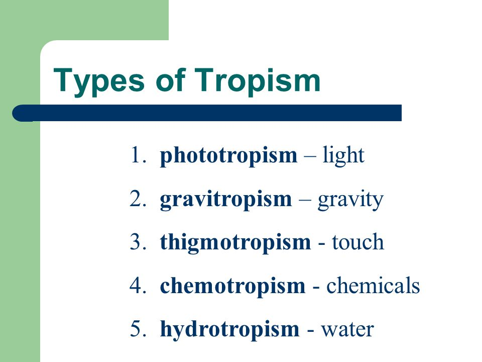 Types of Tropism 1. phototropism – light 2. gravitropism – gravity