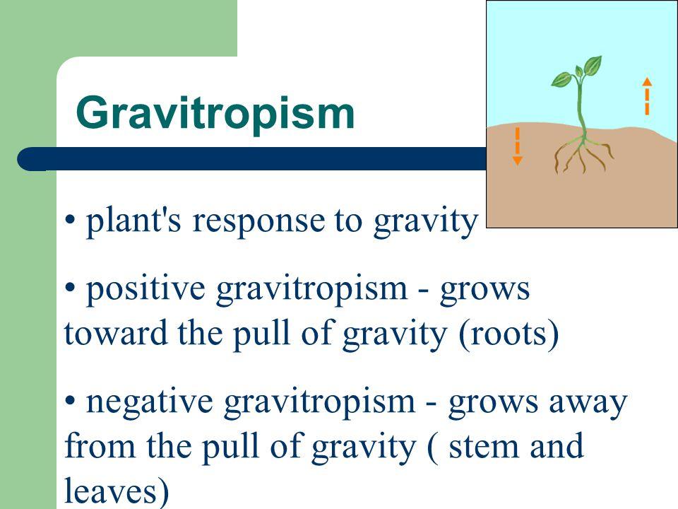 Gravitropism plant s response to gravity
