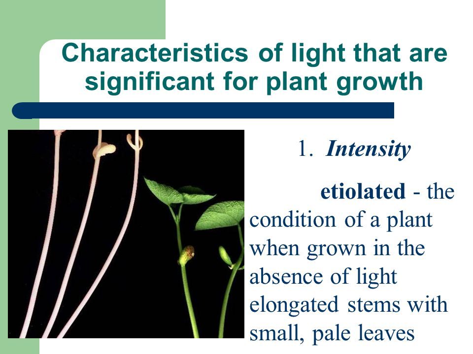 Characteristics of light that are significant for plant growth