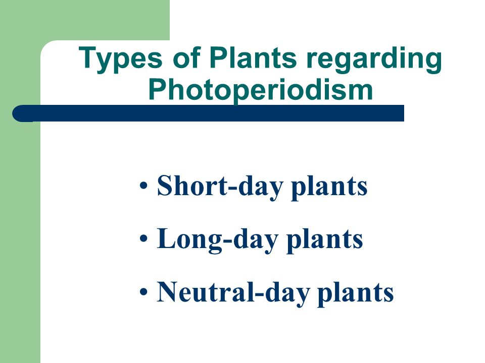 Types of Plants regarding Photoperiodism