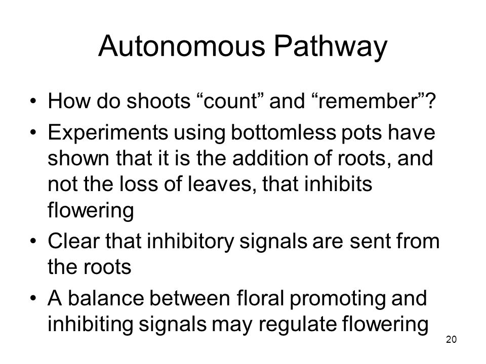 Autonomous Pathway How do shoots count and remember