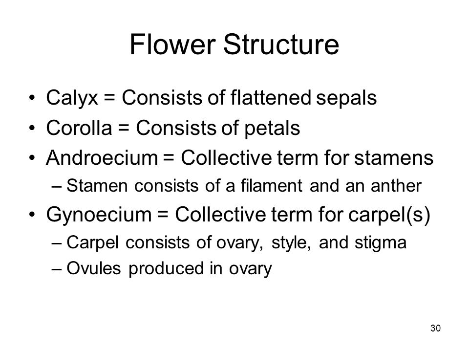 Flower Structure Calyx = Consists of flattened sepals