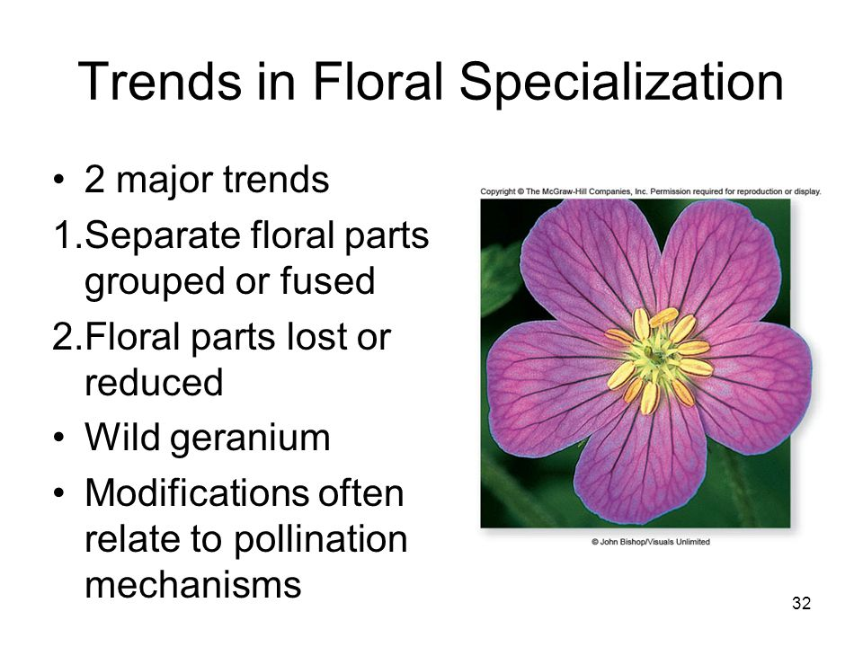 Trends in Floral Specialization