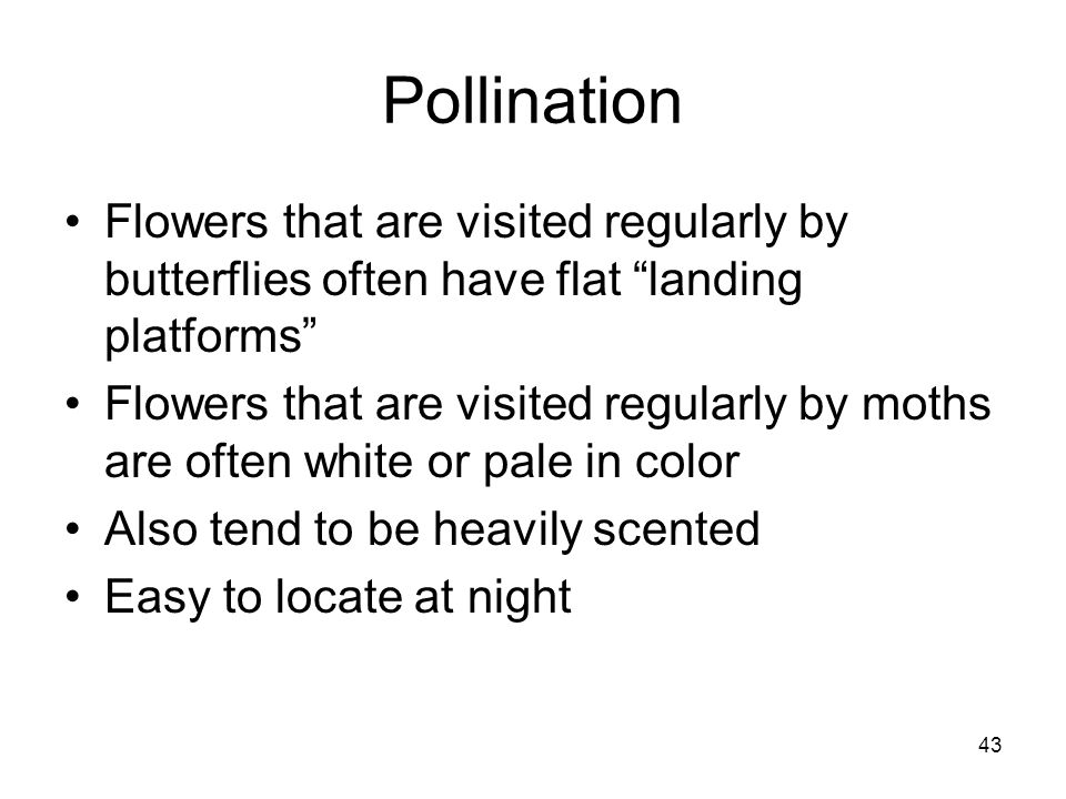 Pollination Flowers that are visited regularly by butterflies often have flat landing platforms