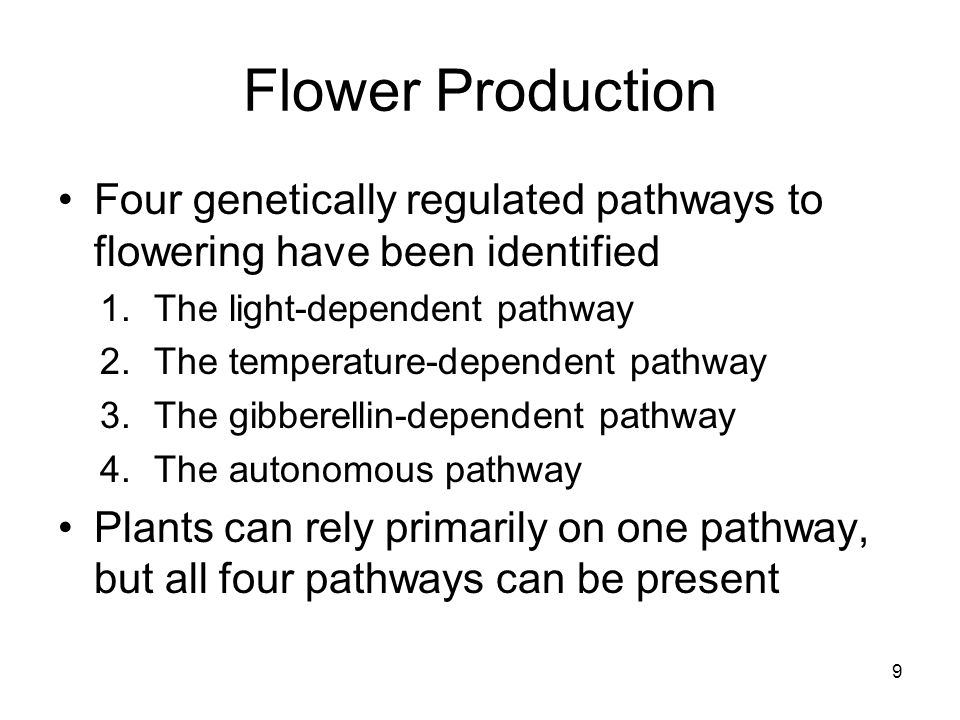 Flower Production Four genetically regulated pathways to flowering have been identified. The light-dependent pathway.
