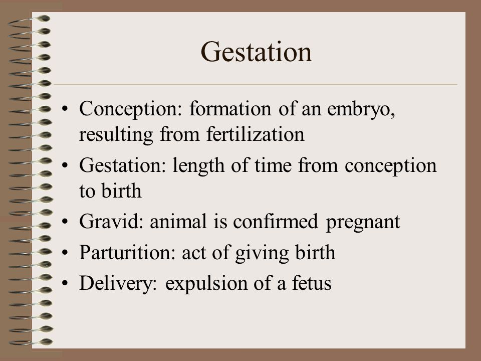 Gestation Conception: formation of an embryo, resulting from fertilization. Gestation: length of time from conception to birth.