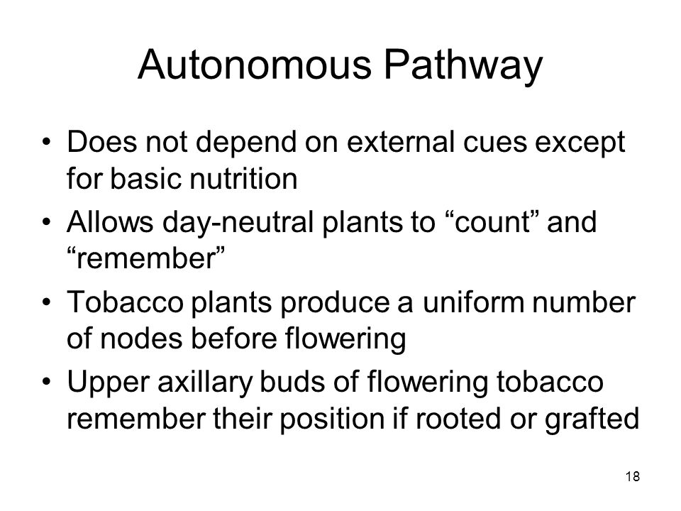 Autonomous Pathway Does not depend on external cues except for basic nutrition. Allows day-neutral plants to count and remember