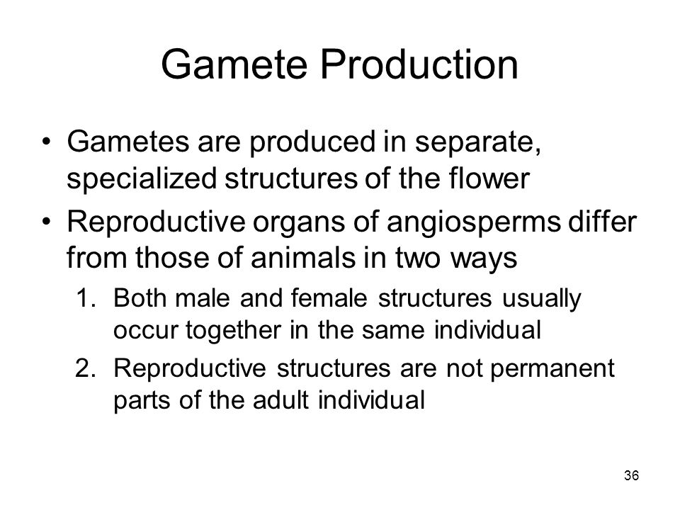 Gamete Production Gametes are produced in separate, specialized structures of the flower.