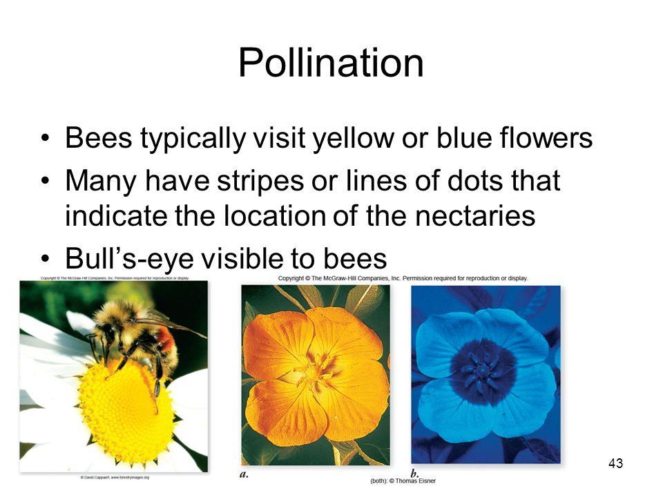 Pollination Bees typically visit yellow or blue flowers