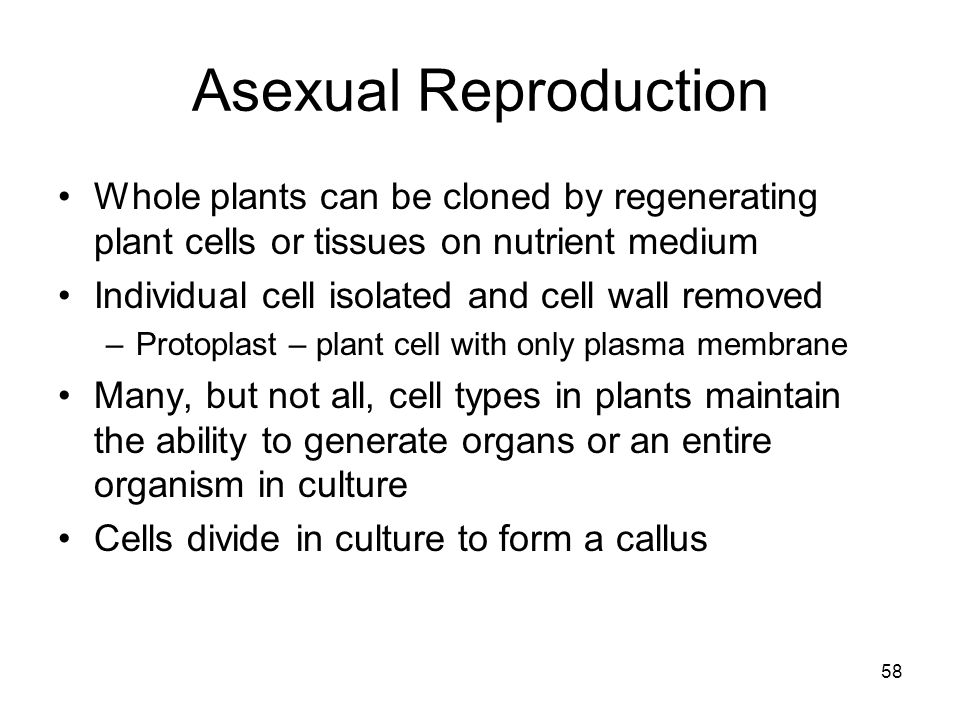 Asexual Reproduction Whole plants can be cloned by regenerating plant cells or tissues on nutrient medium.