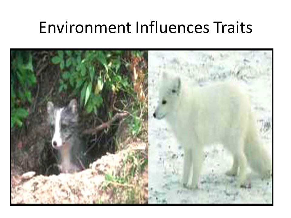 environmental traits - photo #45
