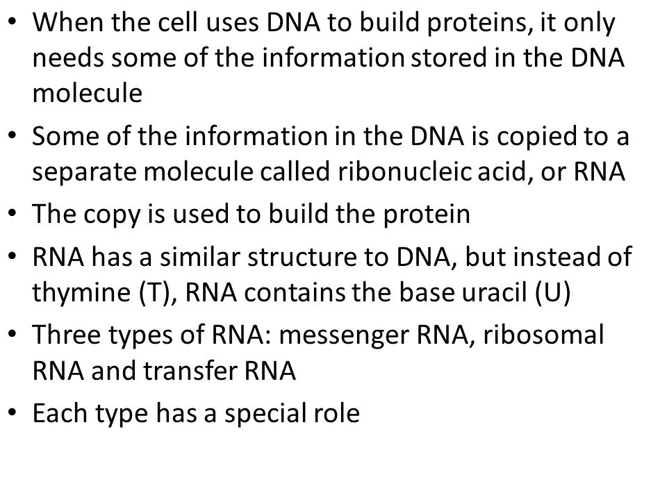 When the cell uses DNA to build proteins, it only needs some of the information stored in the DNA molecule