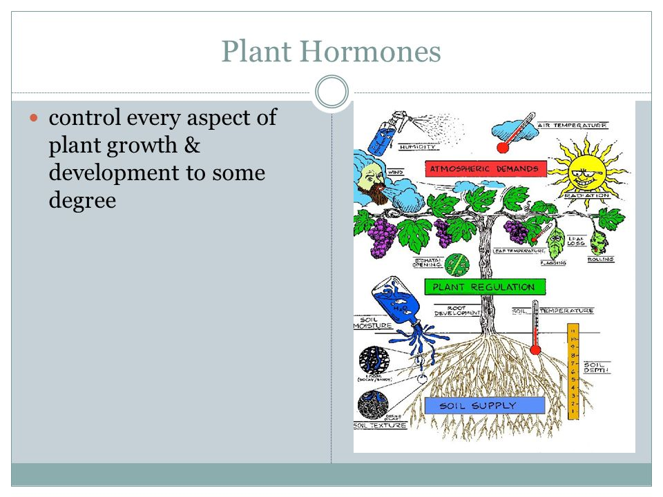 Plant Hormones control every aspect of plant growth & development to some degree