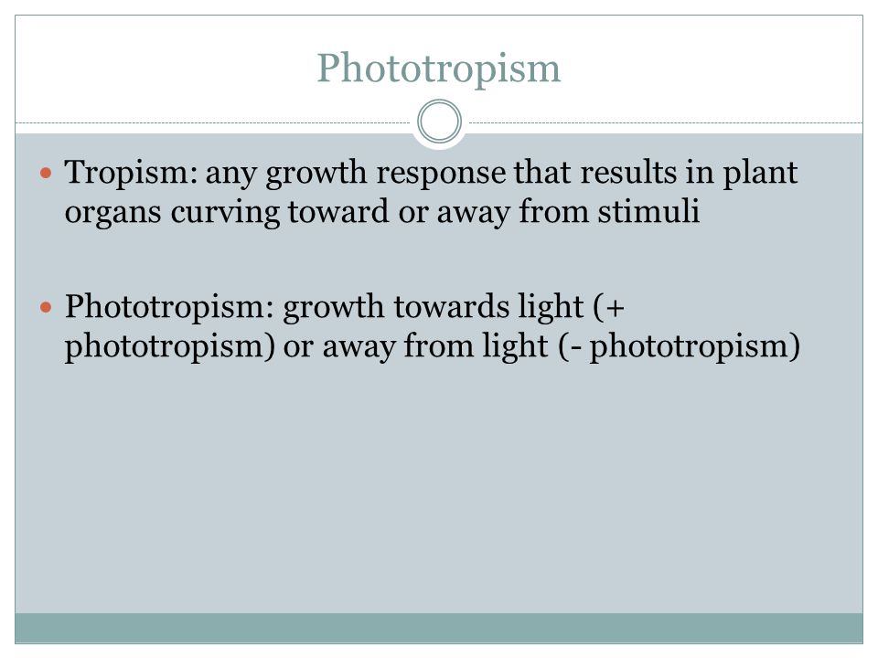 Phototropism Tropism: any growth response that results in plant organs curving toward or away from stimuli.