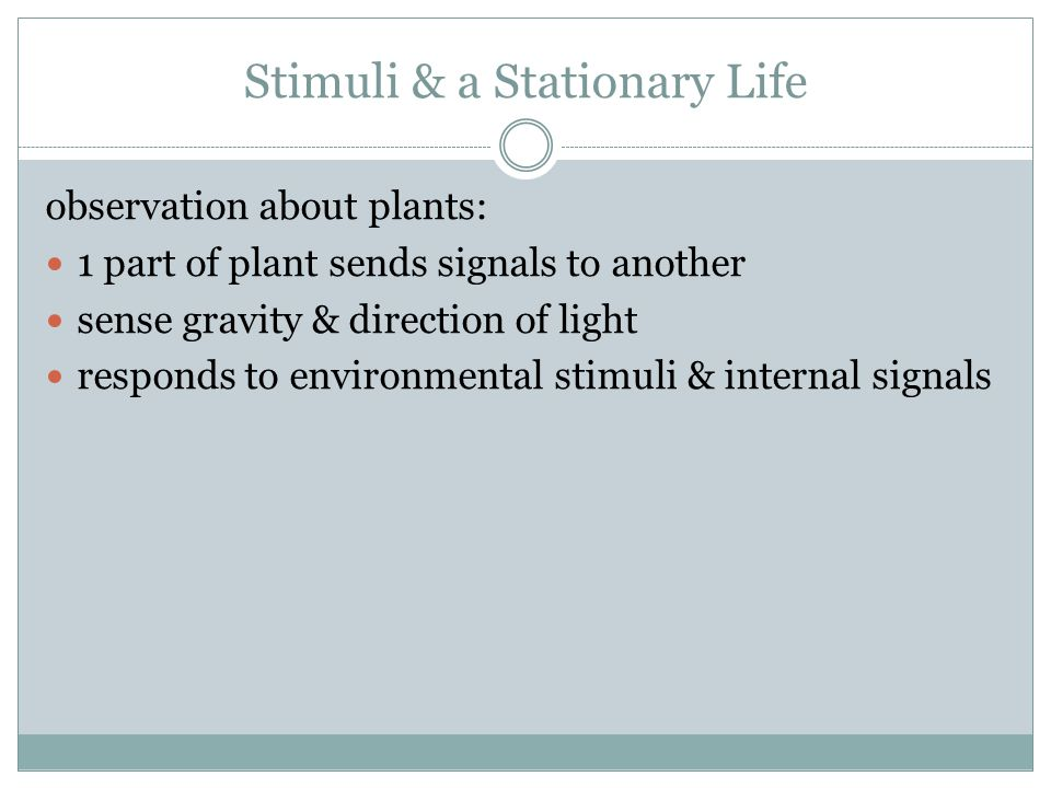 Stimuli & a Stationary Life